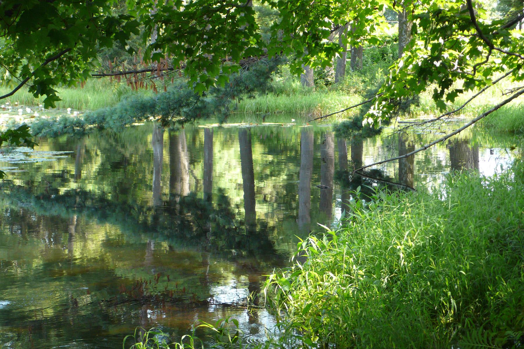 Beaver Swamp-16.jpg