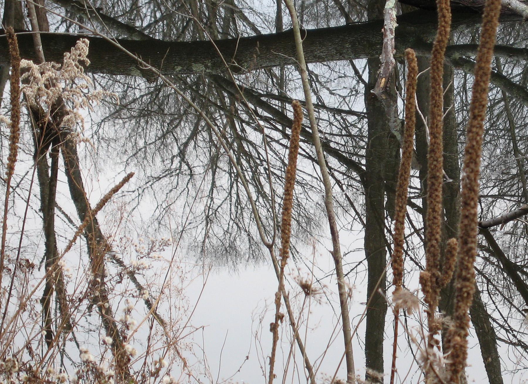 Beaver Swamp-15.jpg
