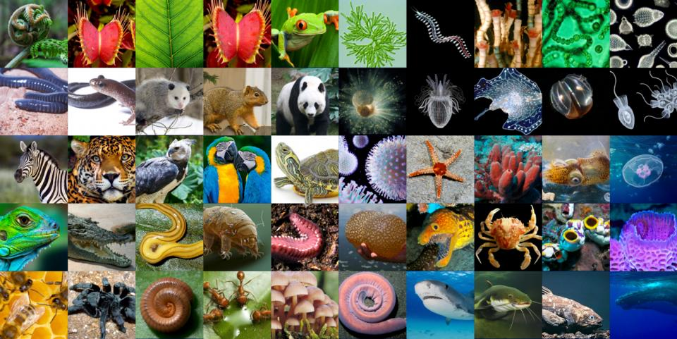 The Earth BioGenome Project aims to sequence the DNA of all known eukaryotic species on Earth, a massive group that includes plants, animals, fungi and other organisms. Image credit: Juan Carlos Castilla-Rubio of Space Time Ventures.