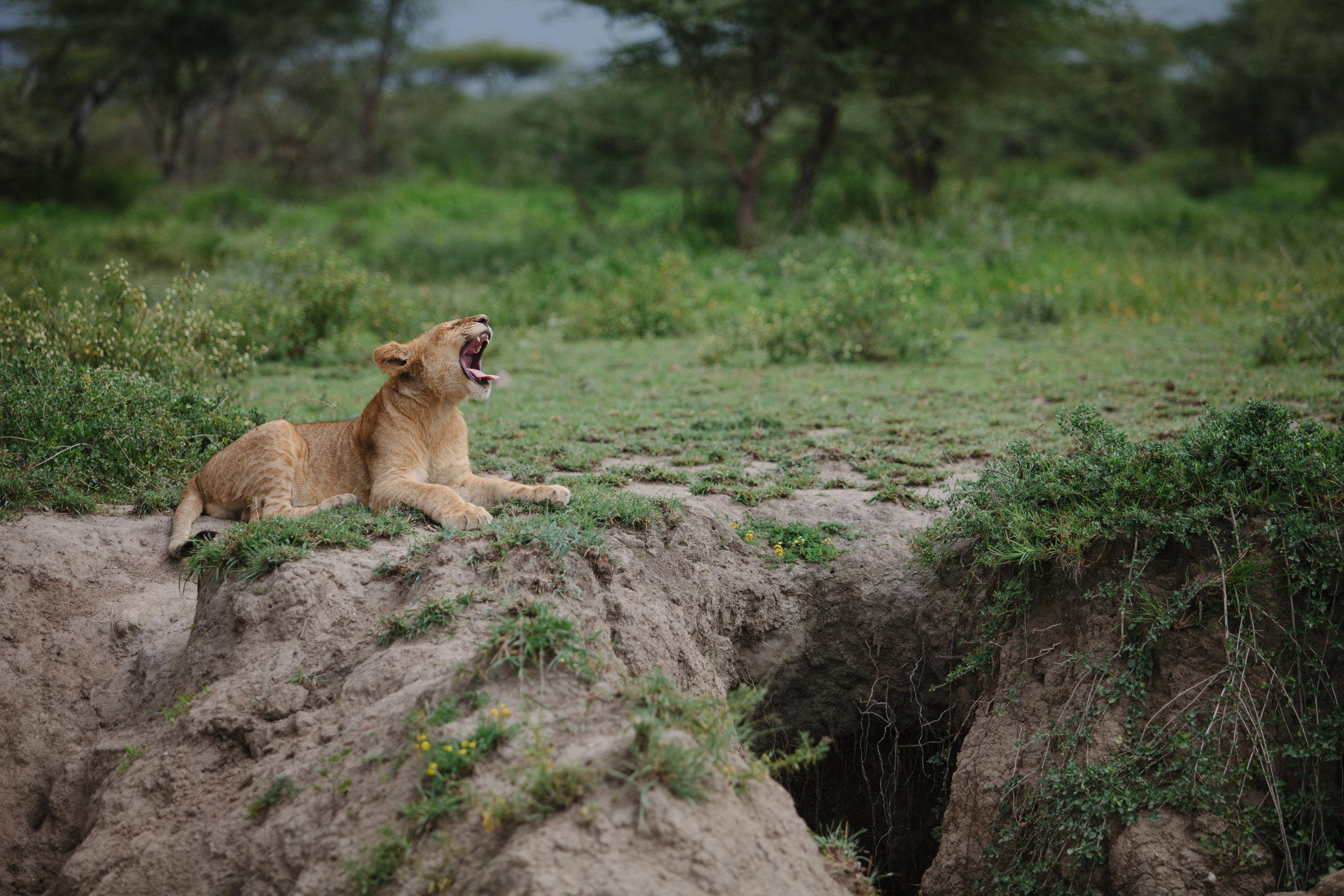 Serengeti-17.jpg