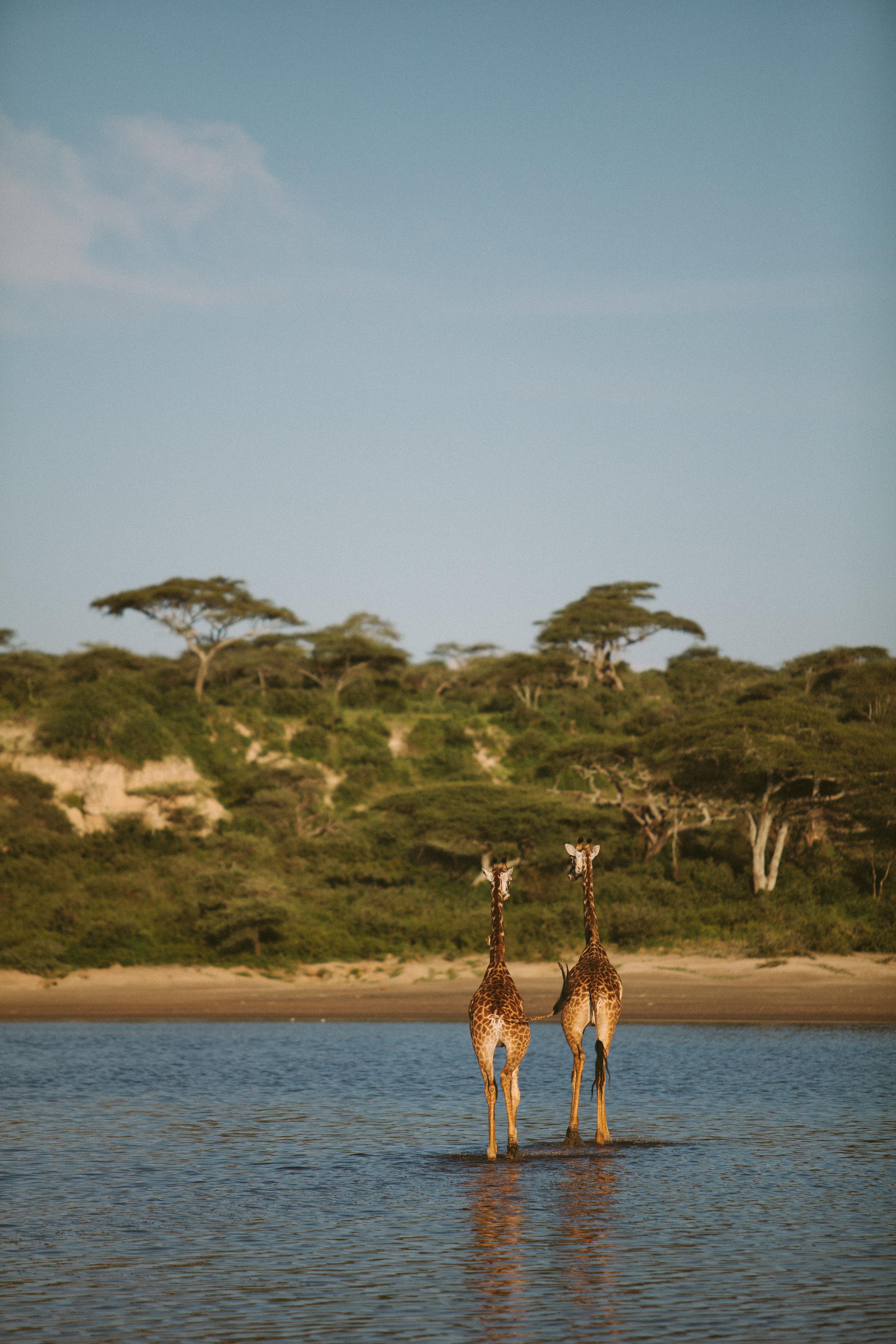 Serengeti-25.jpg