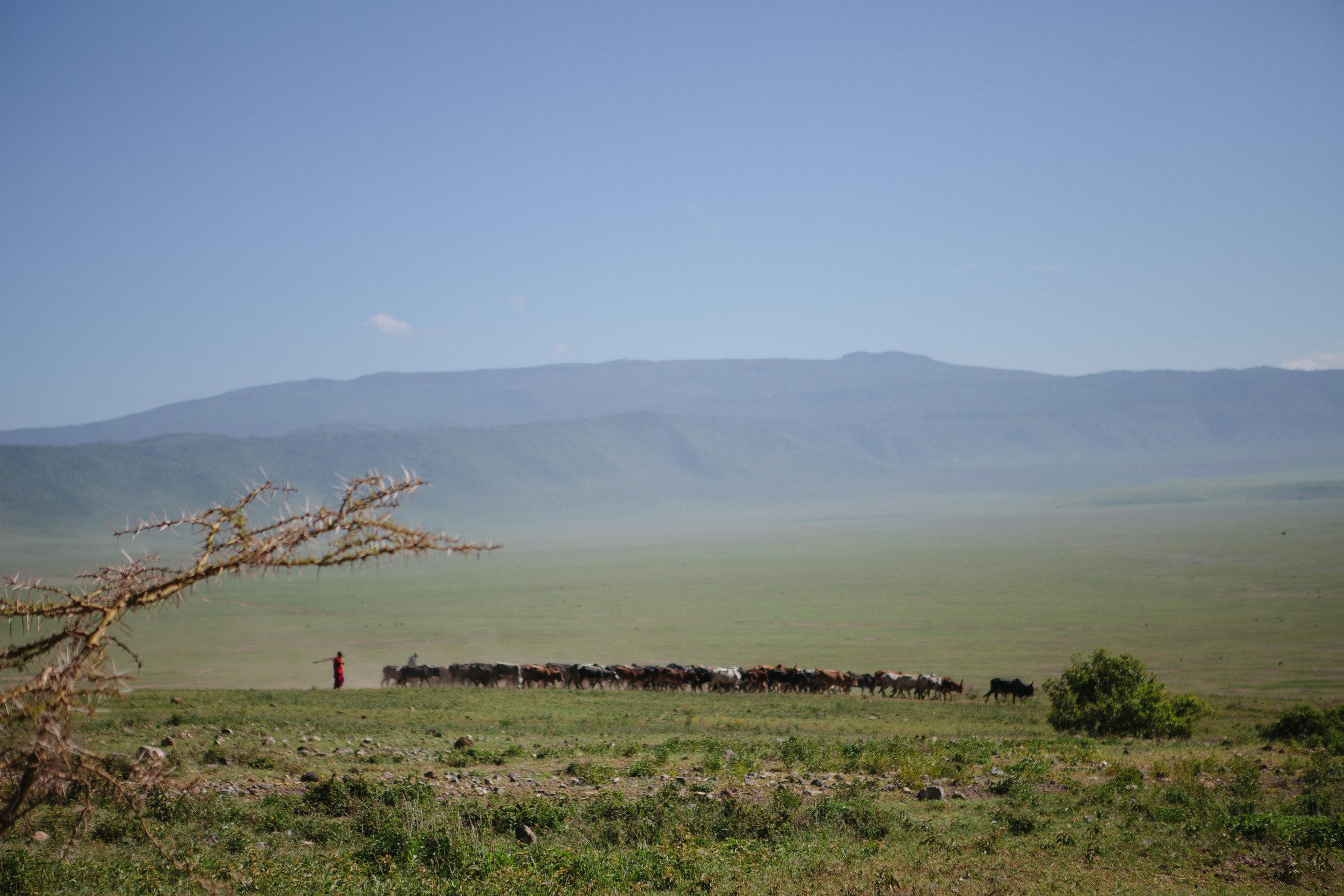 Serengeti-27.jpg