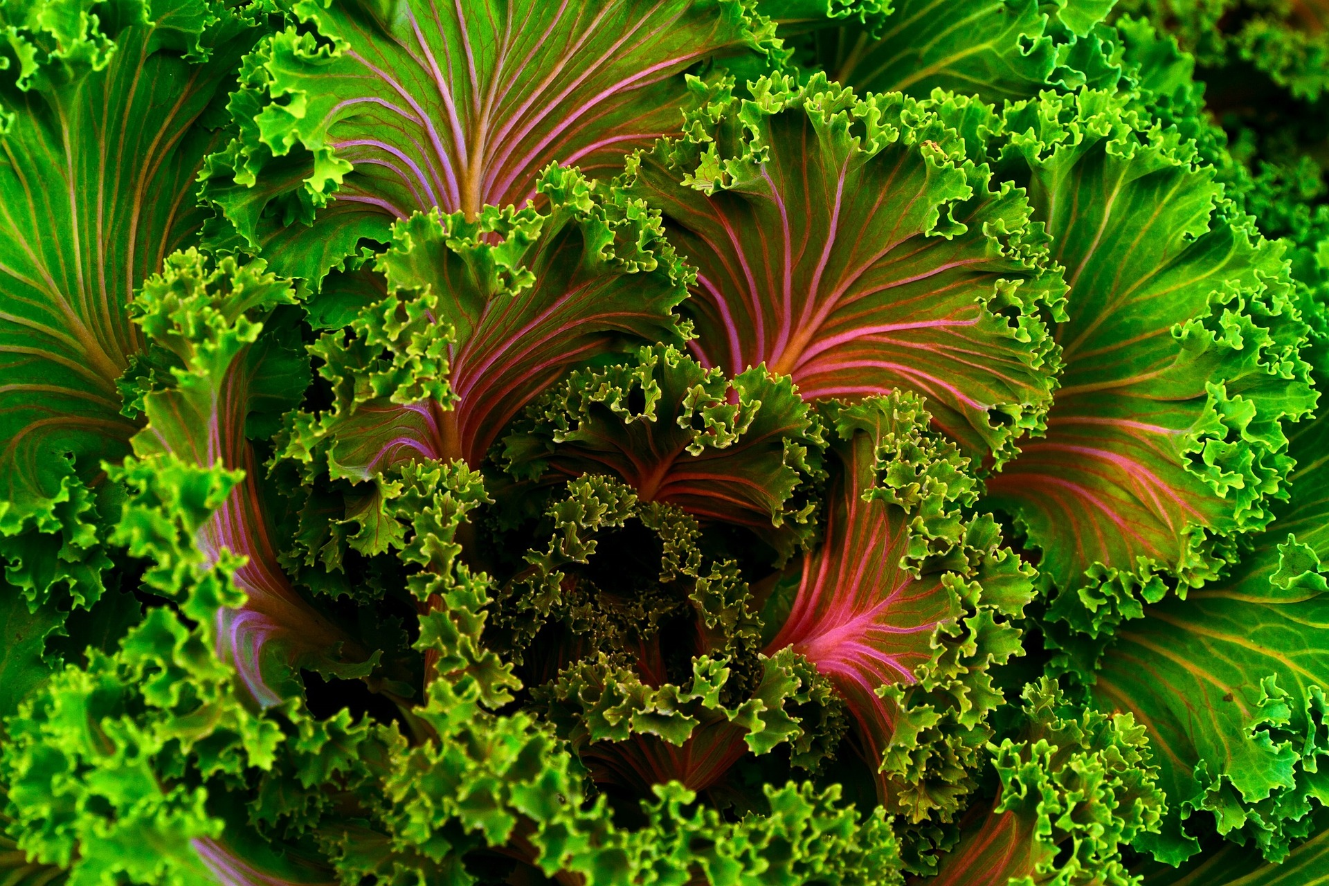 Kale-690051_1920.jpg