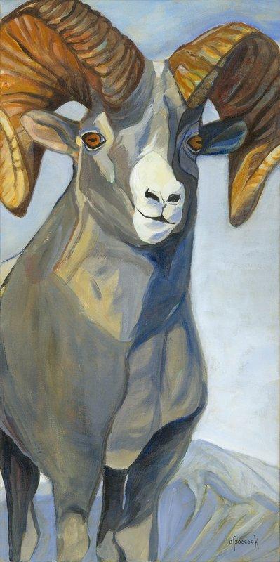 Bighorn Sheep 2