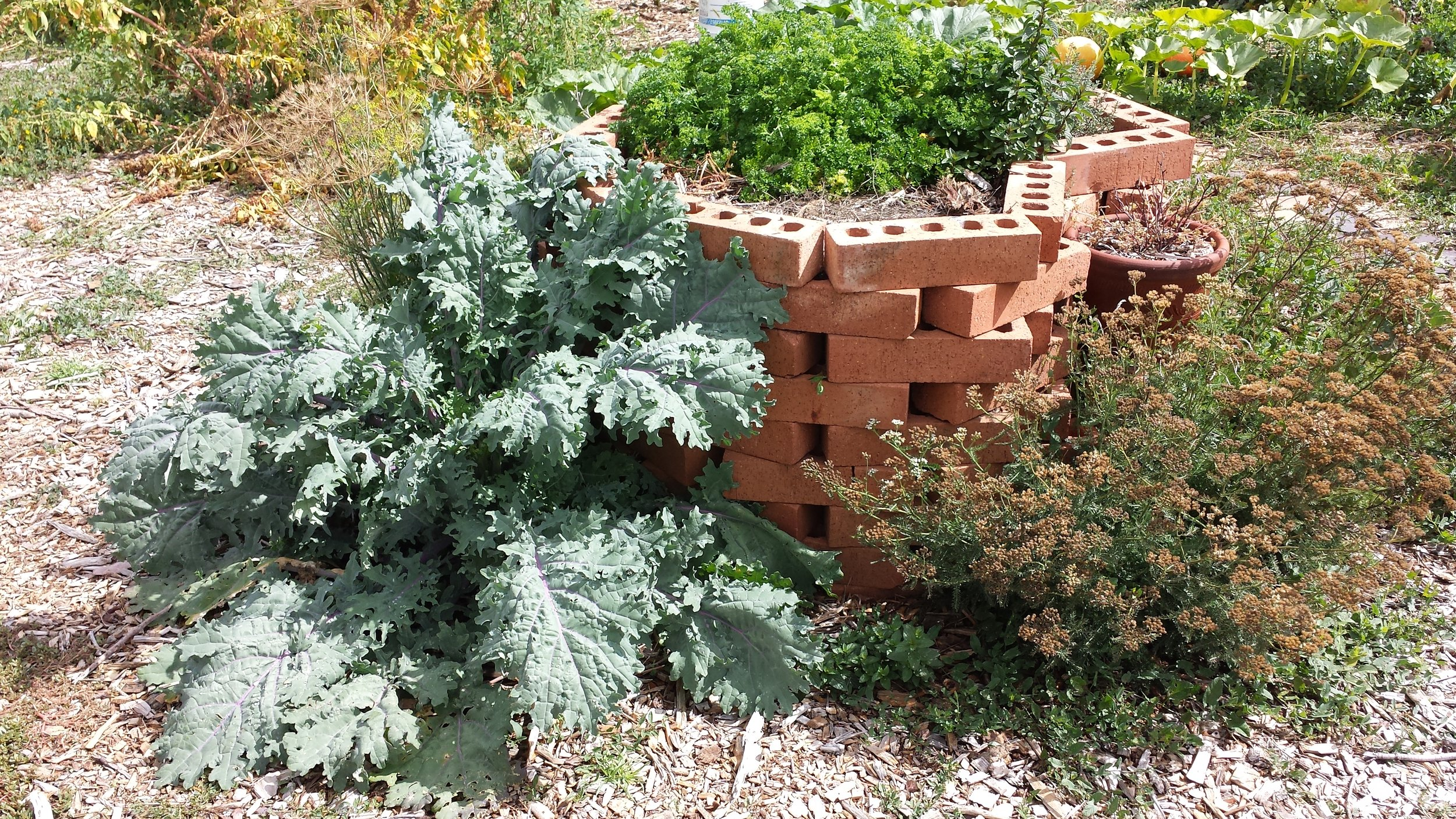 Dill, Kale, Parsley, Mint, and Yarrow, with Potatoes and Pumpkins in the background.