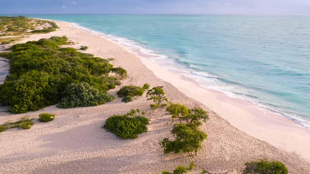 beach trs coral.jpg