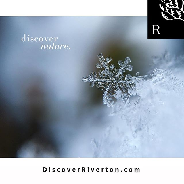 Discover nature's wondrous beauty. | #discoverriverton #fourseasons #natureswonders #intrigued #simplicity #winterwonderland #masterplannedcommunity #onthetnriver #fivemilesfromdowntown #newurbanism