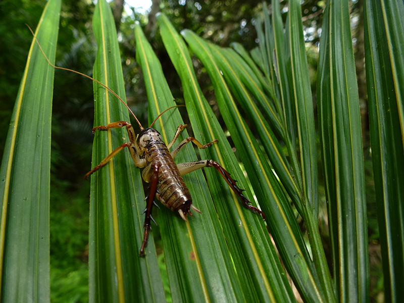 Weta-on-flax-credit-AC.jpg