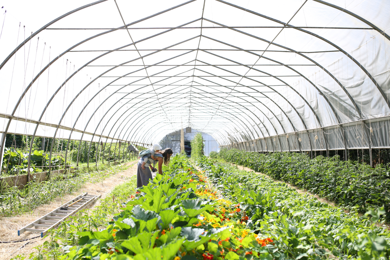 harvesting in greenhouse.jpg