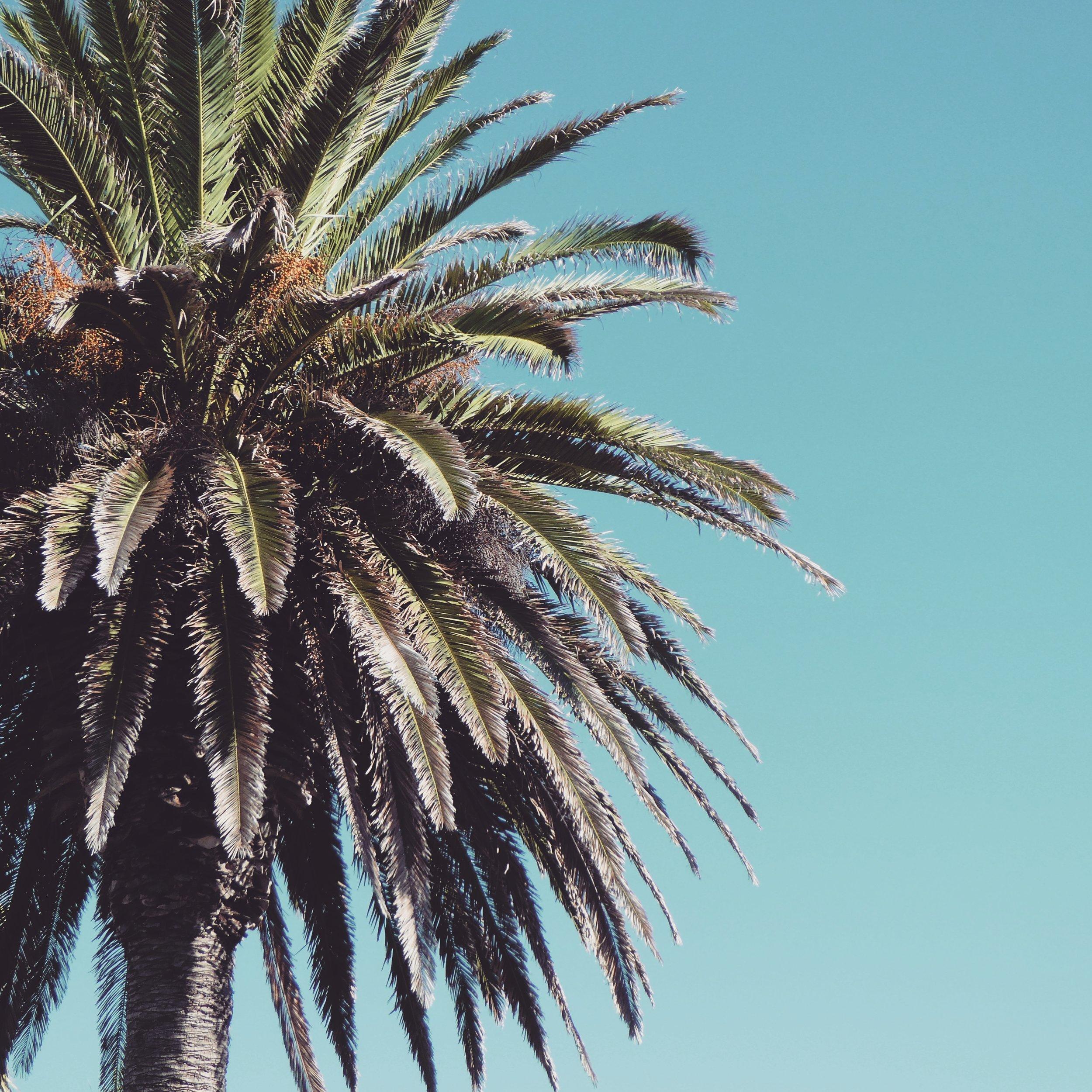 Wainui-palms