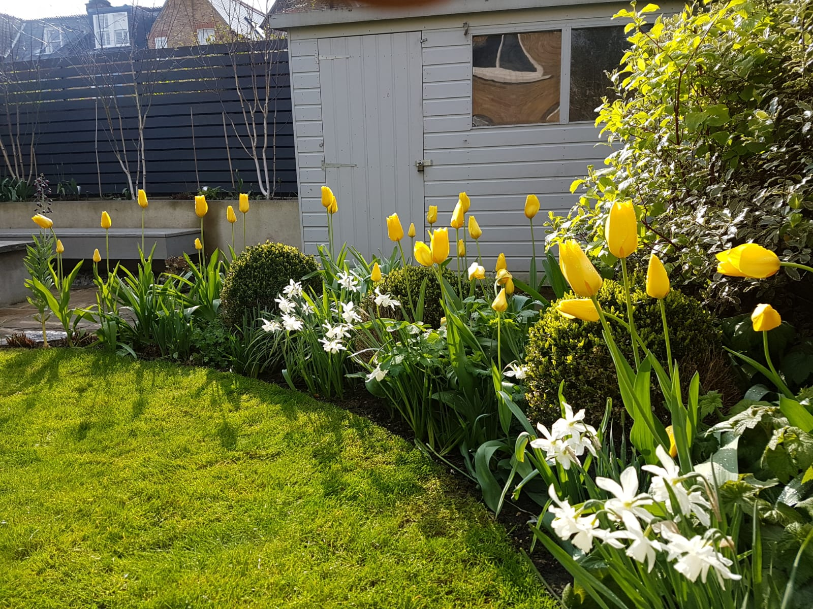 Beautiful Spring Tulips and Daffodils