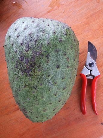 Annona muricata.jpg