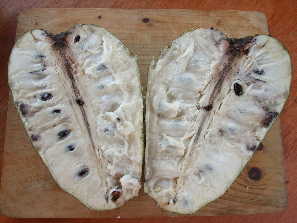 Annona muricata cross section.
