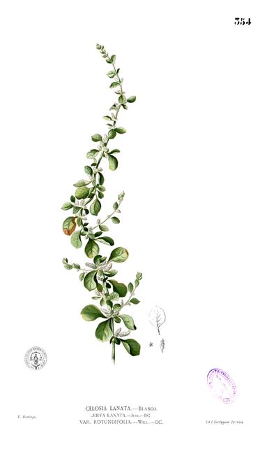 Francisco Manuel Blanco (O.S.A.)- Flora de Filipinas [...] Gran edicion [...] [Atlas II].  [1]