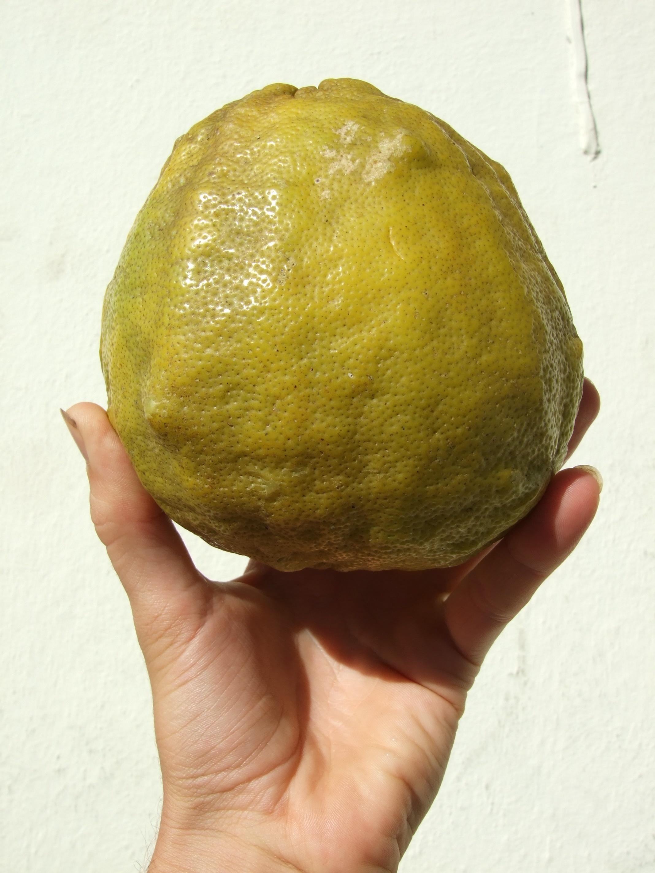 large-citrus.jpg