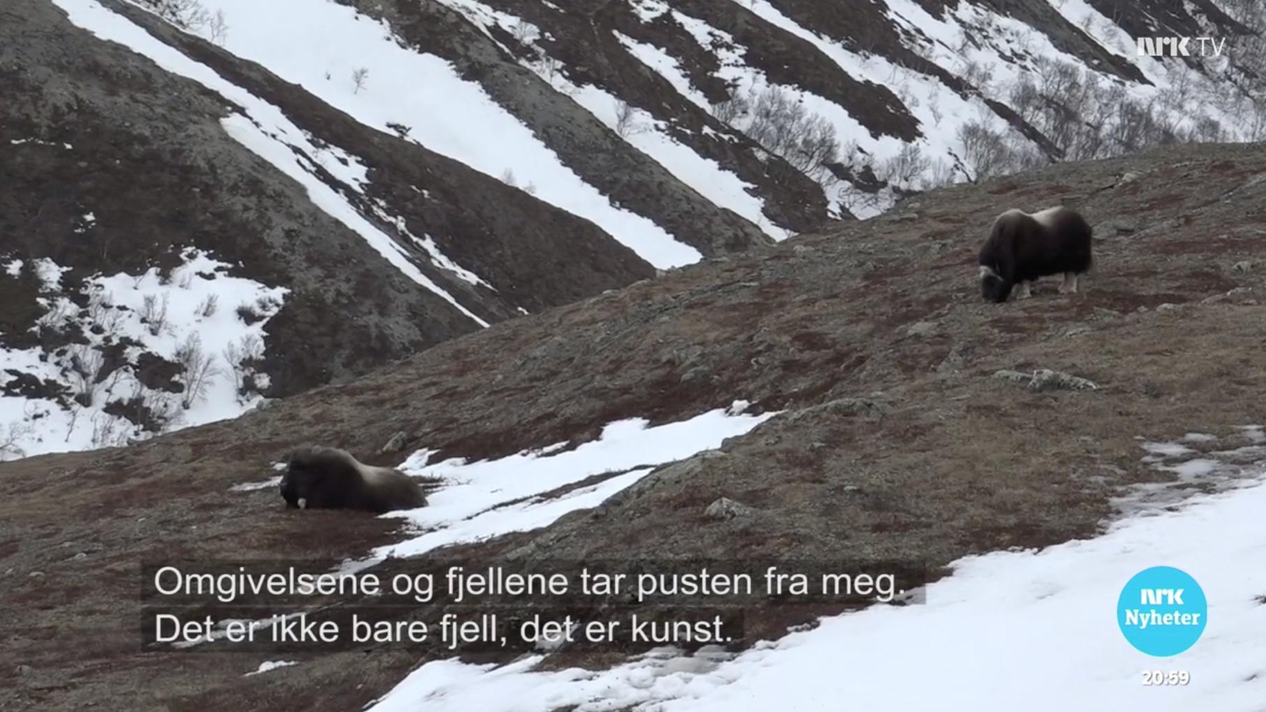 NRK Hedmark og Oppland februar 2019. Klikk på bildet for å se innslag.