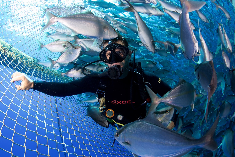 Diver in Net Pen.jpg
