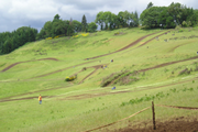 grasstrack.png