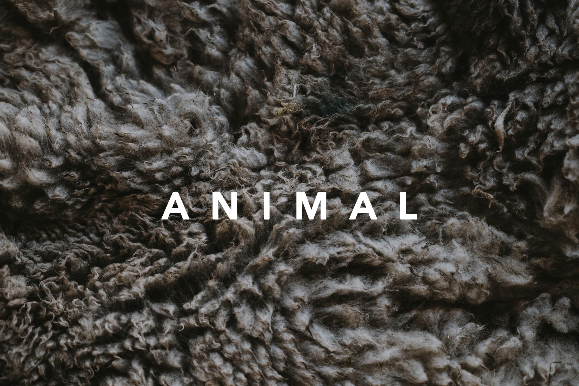 HAAS_Template ANIMAL.png