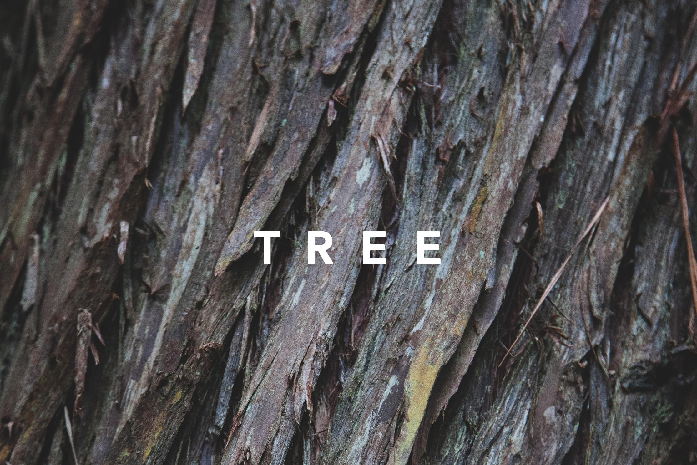HAAS_Template TREE.png