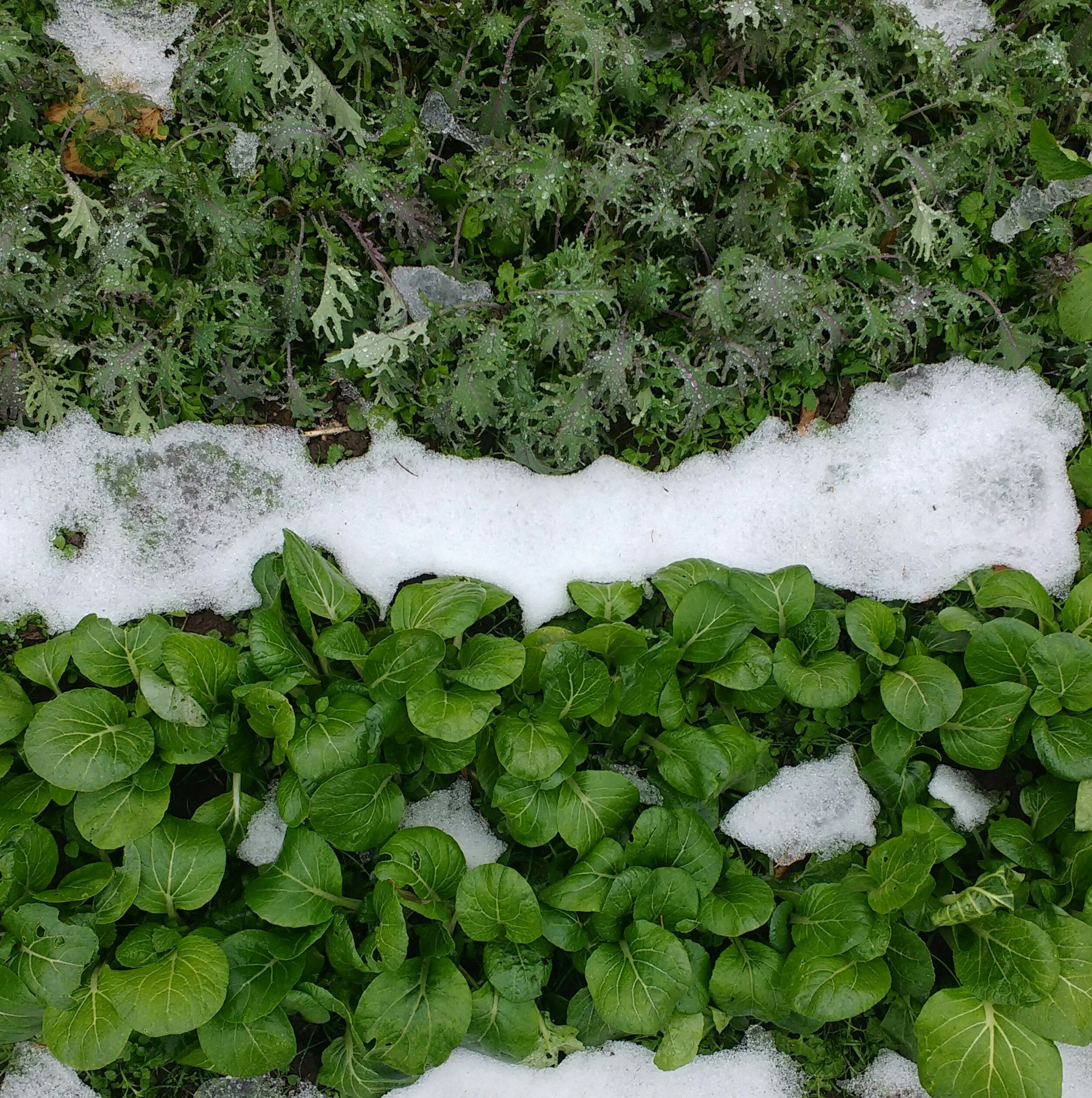 Fall to Winter: Season Extension in your Garden - Learn how to keep harvesting from your garden until the end of the year (and beyond!). We'll show you simple, effective methods of extending your gardening season, so that you can enjoy fresh-picked, tasty produce into the winter months.Date: September 2019Time: to be announced in the Summer