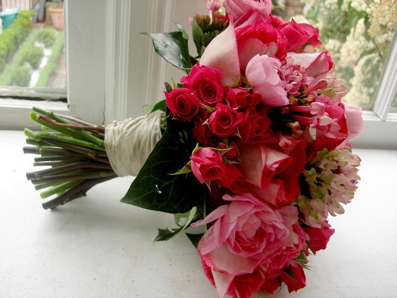 red and pink roses, savannah, usa