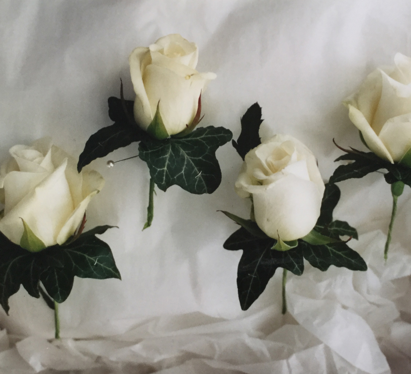 buttonholes. roseand ivy leaves