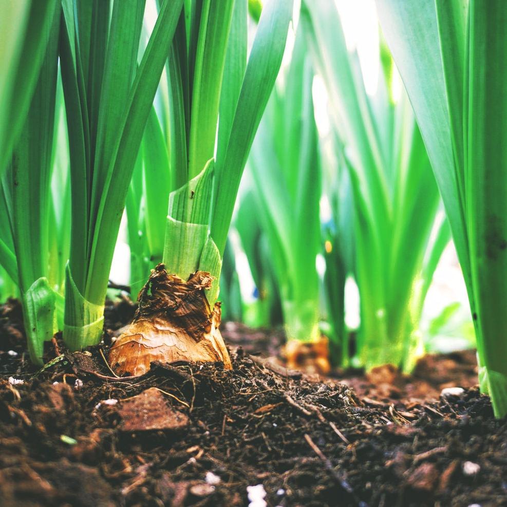 Karma | The Seeds We Sow