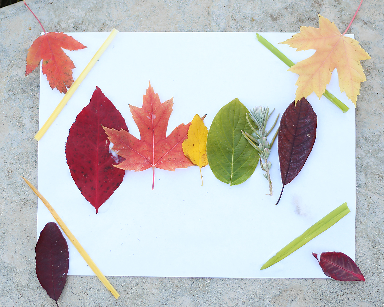 Fall Art Project
