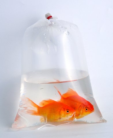 8. Live Goldfish - Maybe throw in a bottle of food? Someone is about to get so lucky.