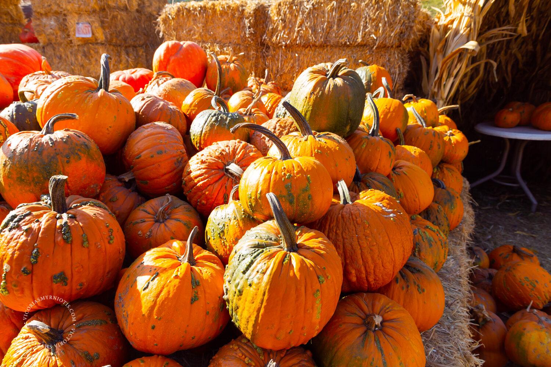 Pumpkin Patch Date in Half Moon Bay Photography by Victoria Smyrniotis