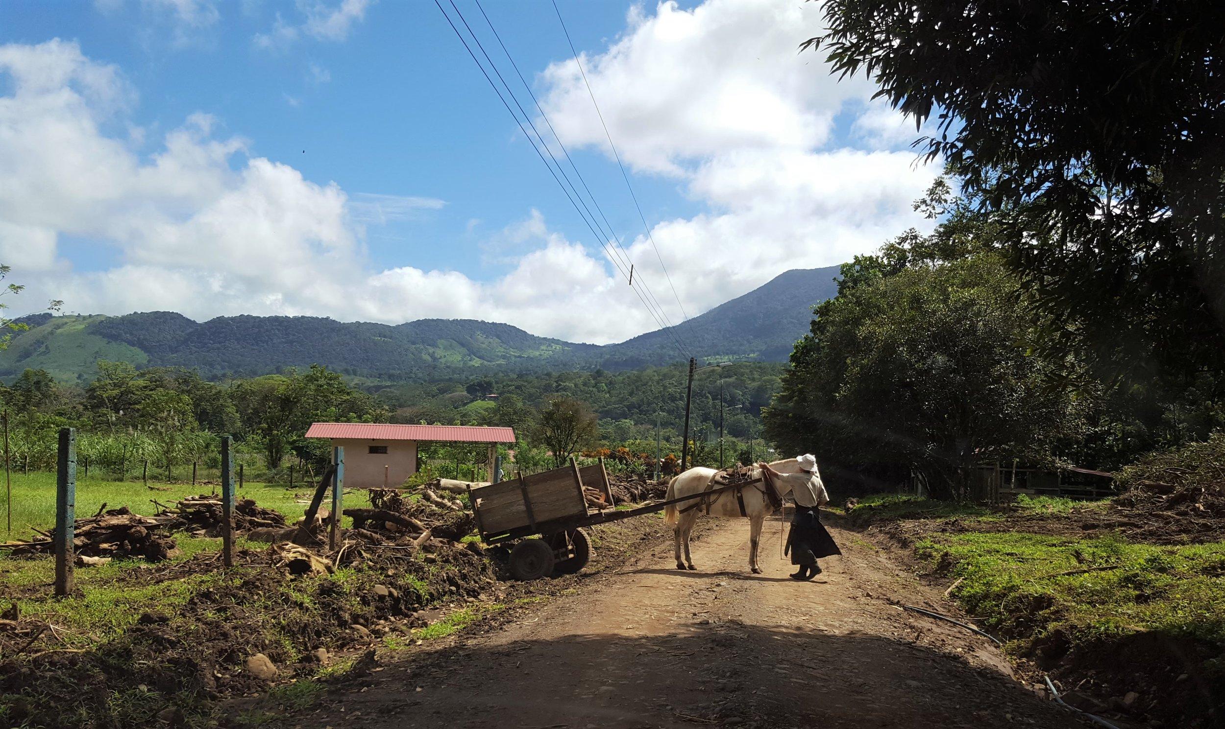 1 - Bijagua horse and road.jpg