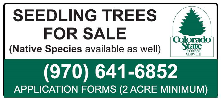 CSFS Seedlings.png