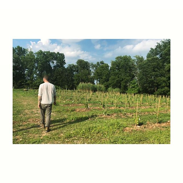 This is @tcavallo proprietor of @wildarcfarm - a little slice of heaven and an experiment in #biodynamic viticulture in the #hudsonvalley 🍇🍏🍎🥕 #naturalwine