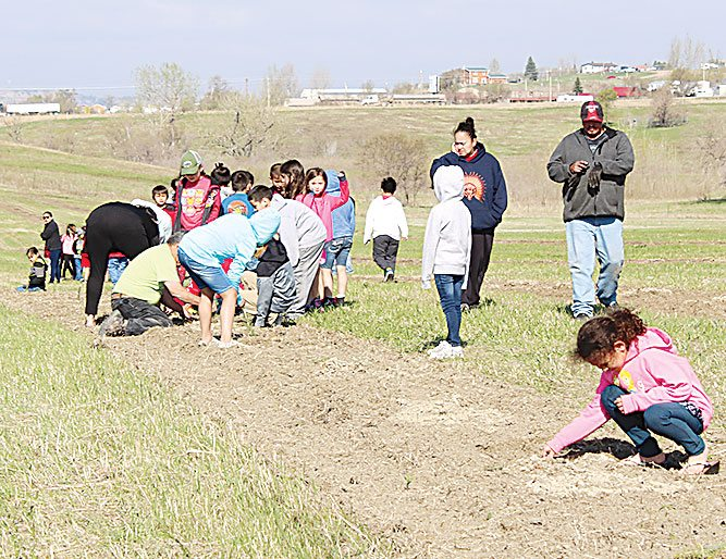 Submitted Photo   Students from New Town Elementary School planted trees in the northern area of New Town on Wednesday during the first tree planting initiative. The tree planting is an initiative of Three Affiliated Tribes Councilwoman Dr. Monica Mayer.