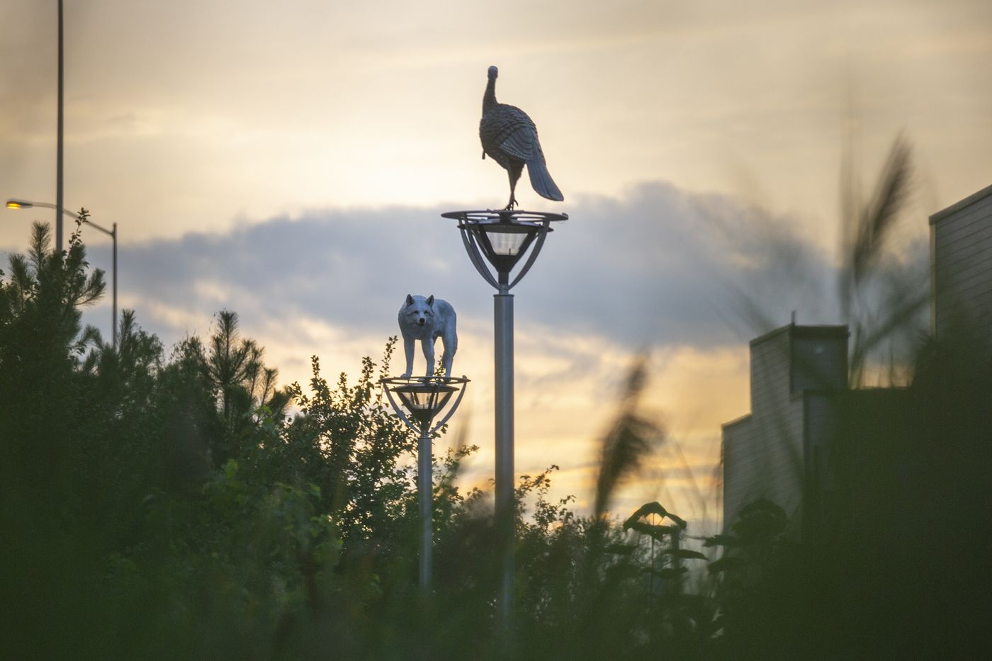 TYGER WILLIAMS / STAFF PHOTOGRAPHER   A wolf and a turkey stand atop lampposts on East Columbia Ave.