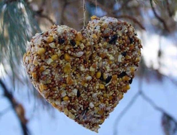 DIY Heart-Shaped Bird Feeder
