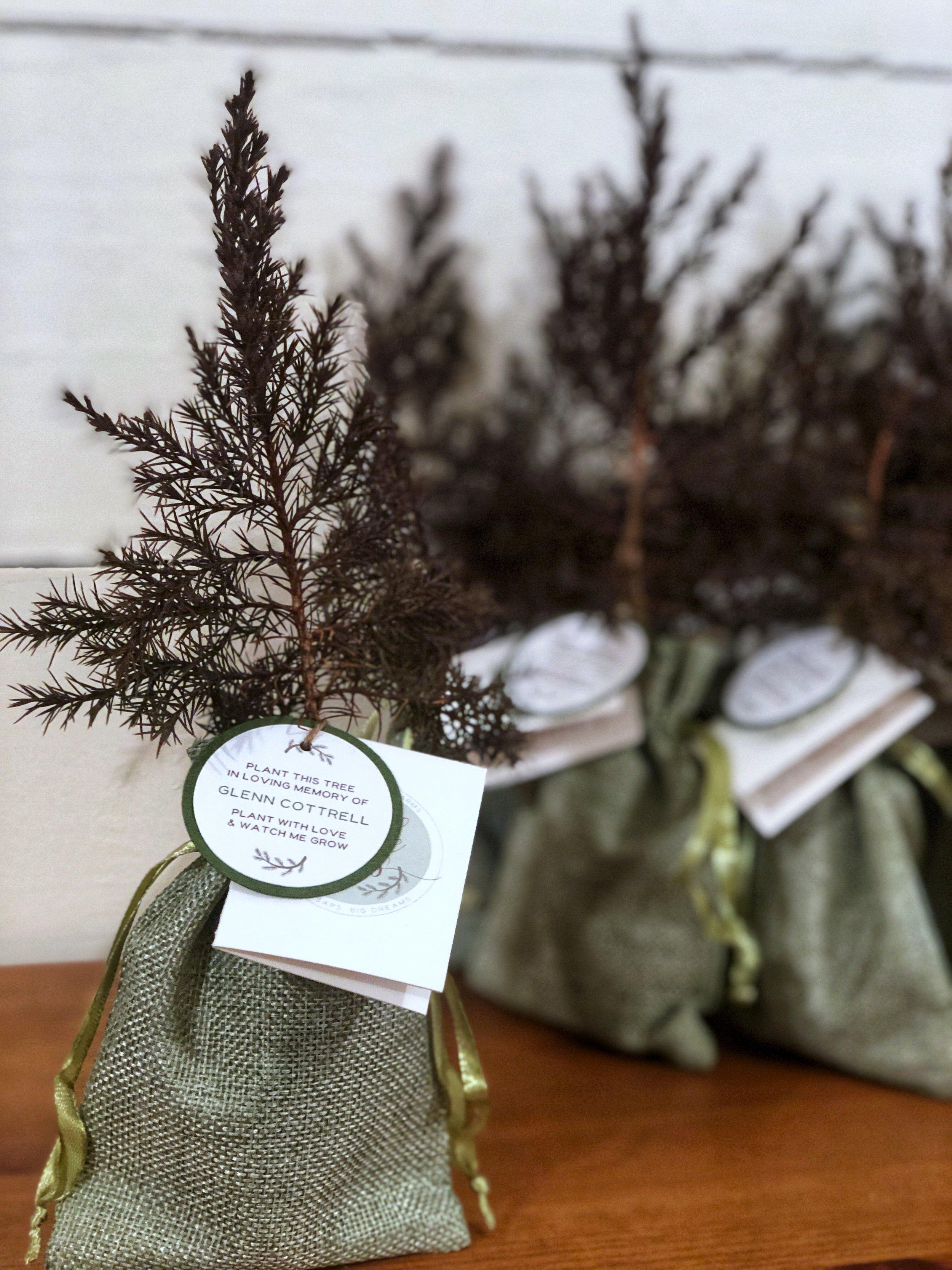 Tree Seedling Memorial Gifts