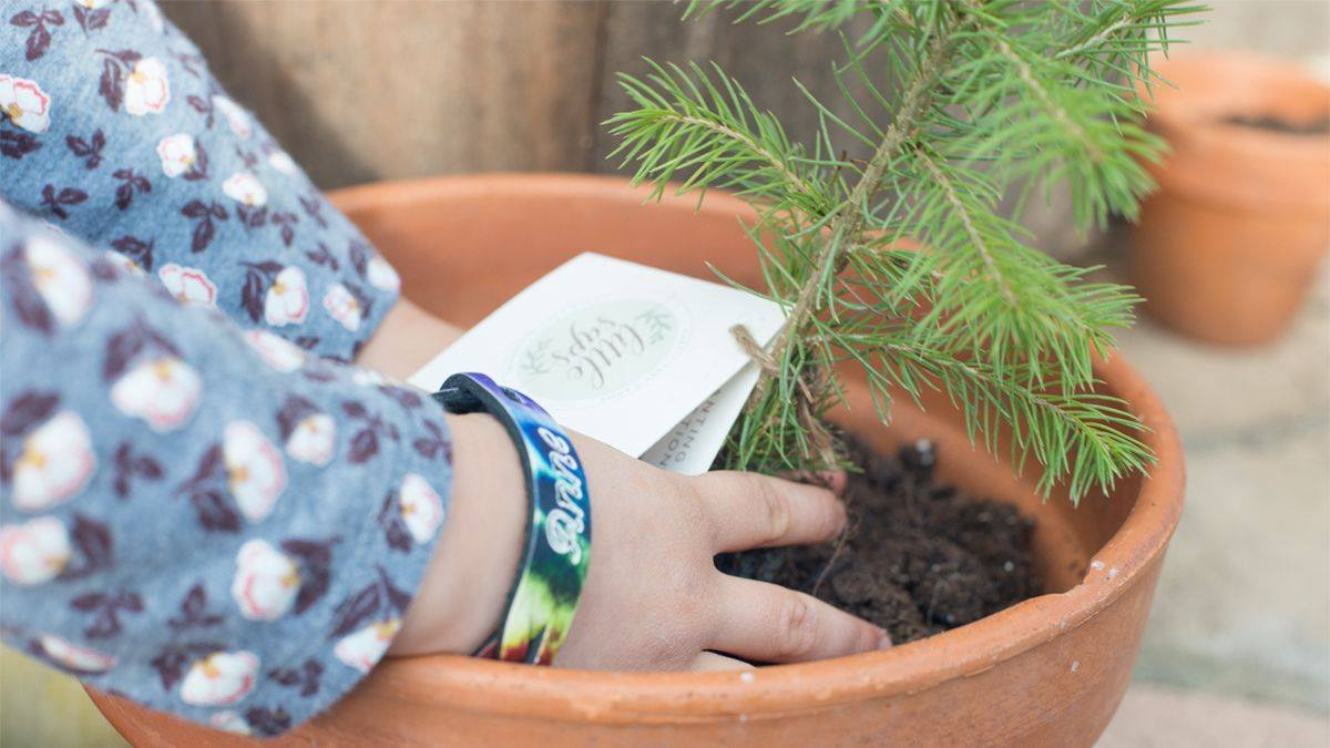 Tips for planting your tree seedling