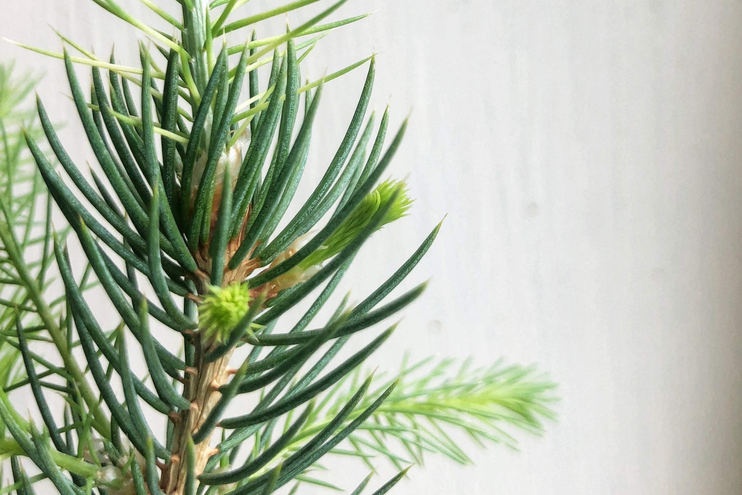 Tree Seedling Gifts