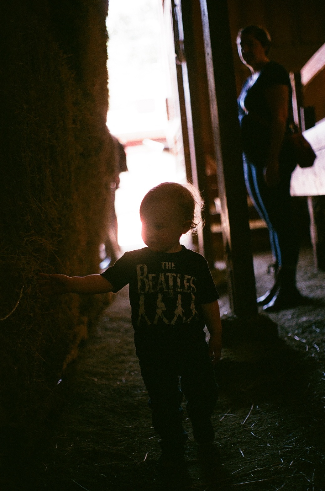 bowie at the farm