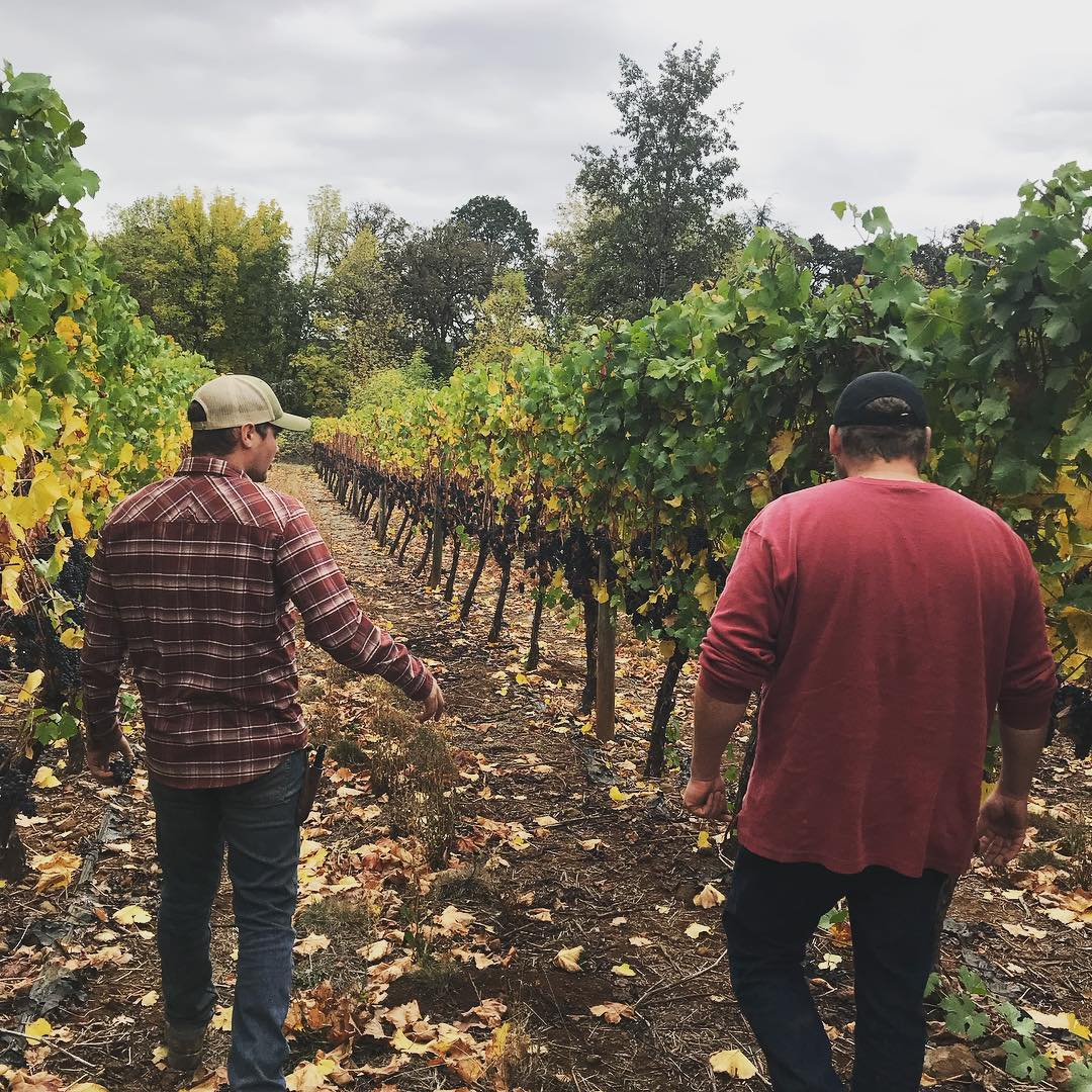 Vineyard managers Austin (left) and Ben (right) Kraemer survey the fruit and recent leaf-pulling.