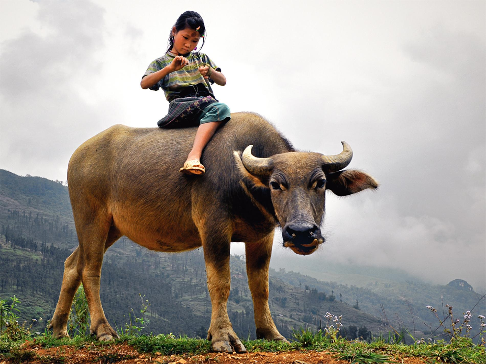 For locals Buffalo riding is just an easier way to get around. (Image sourced from Google)