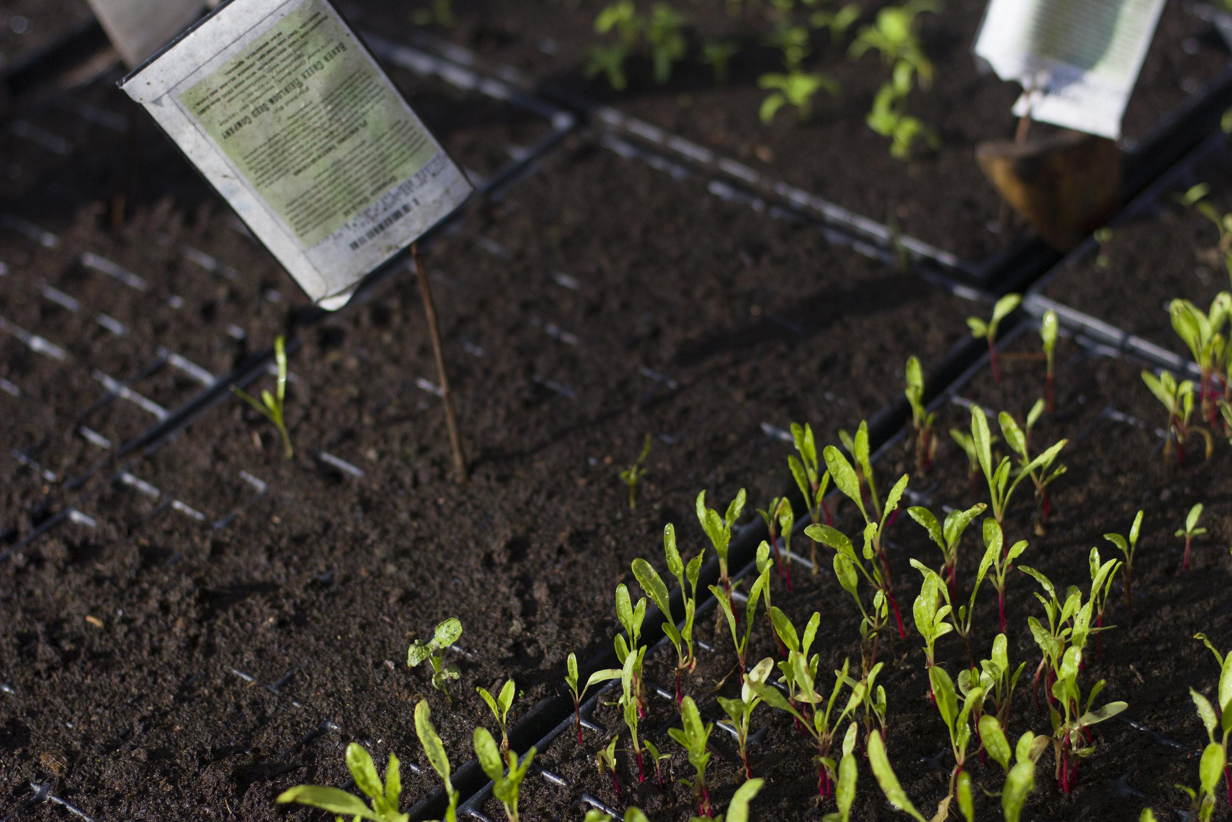 Organic farming - CULTIVO ORGANICO