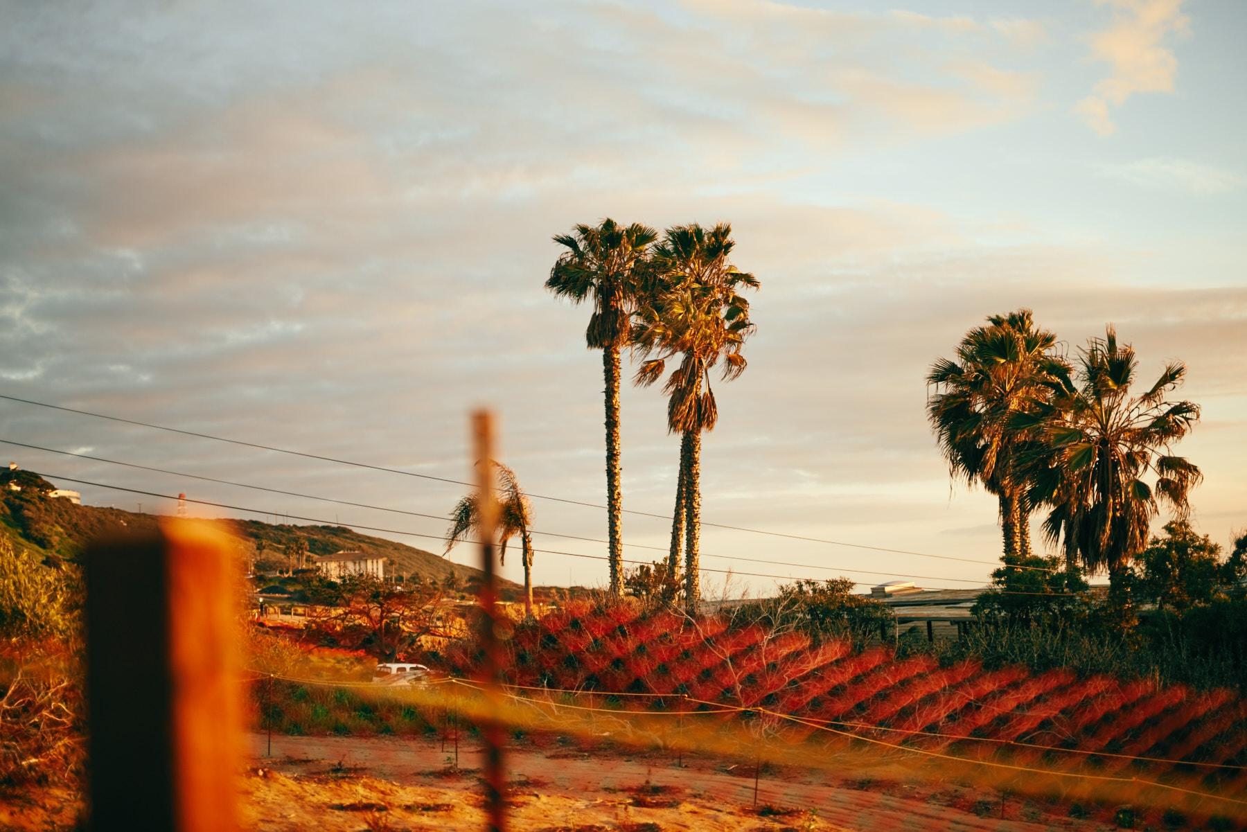 2019-3-4 San Diego Layover-019.jpg