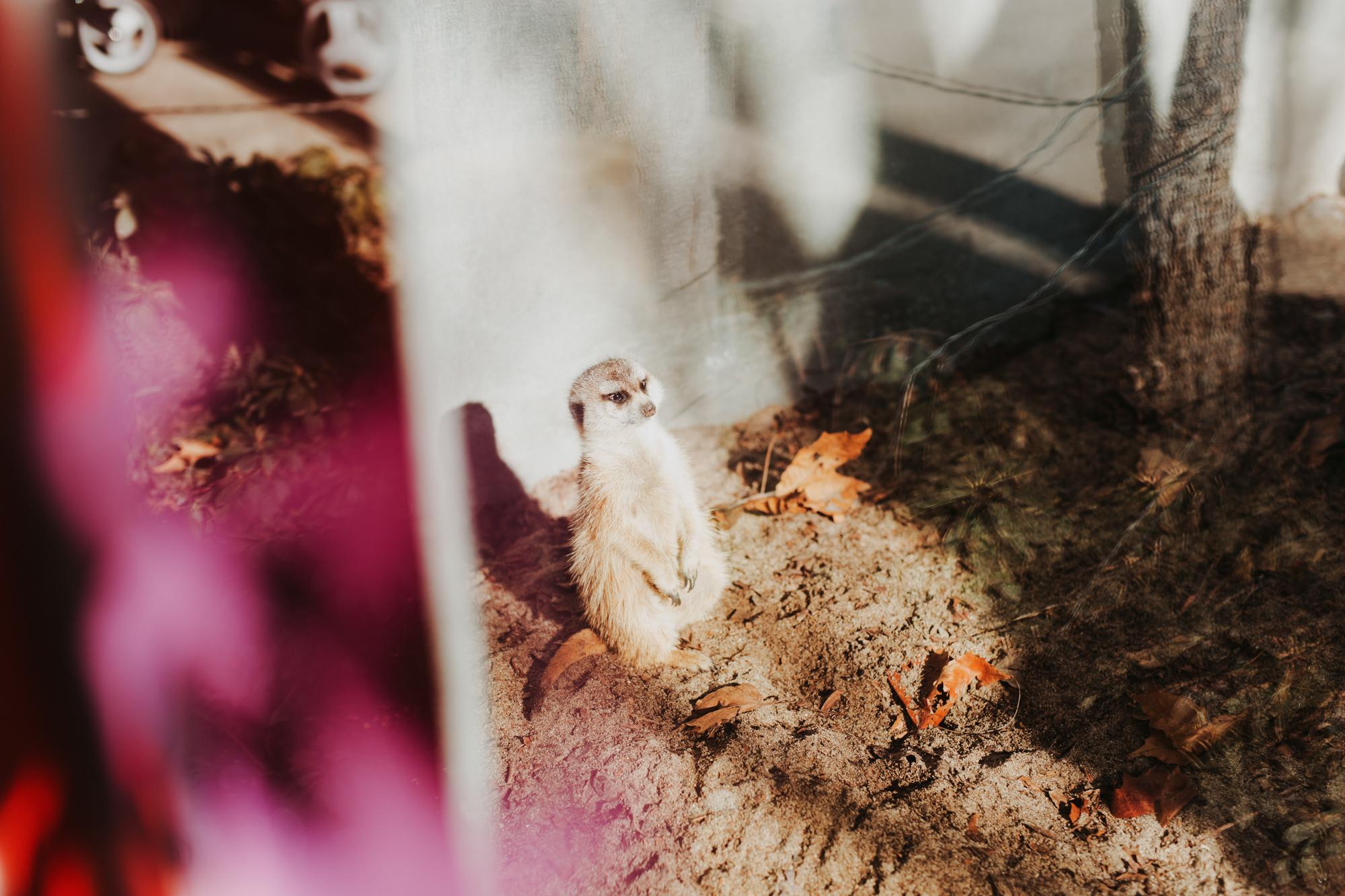 02152015 Zoo with Zoe37.jpg