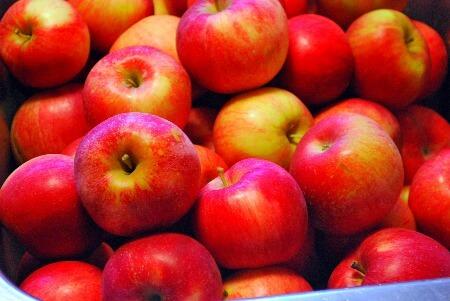 bunch_of_apples.jpg