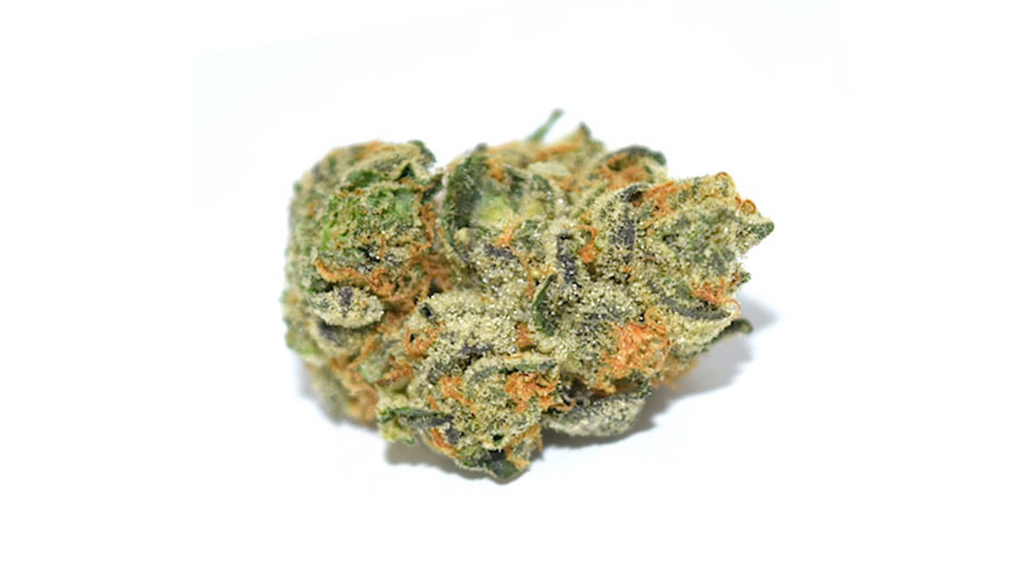 WestCanna's Forum Cut GSC is The Planter's Guide inaugural weed of the week.