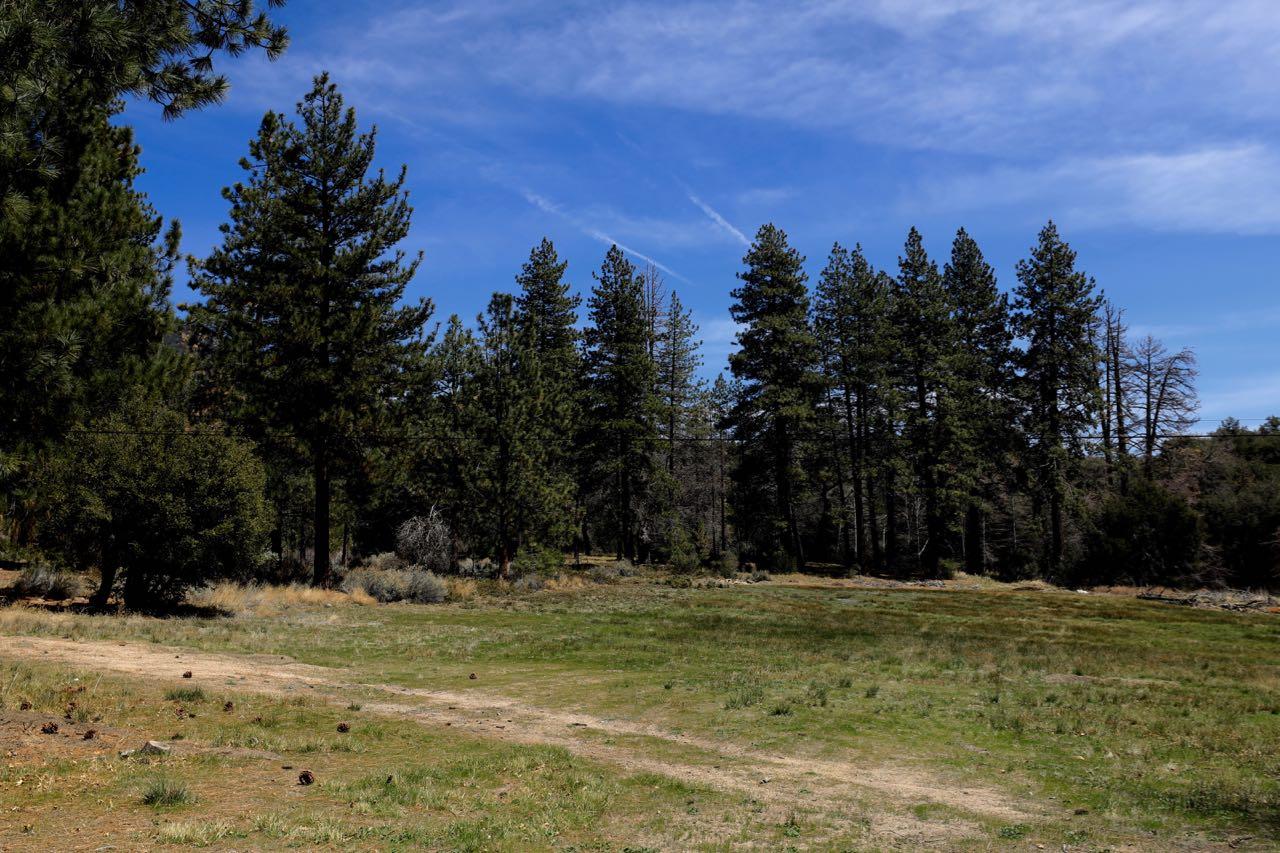CSM-Meadow-1295.jpg