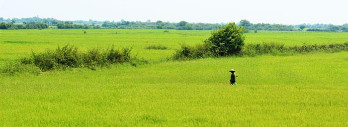 Lady-Field
